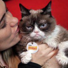 """Nugaišo ko gero populiariausia pasaulyje katė """"Grumpy Cat"""""""