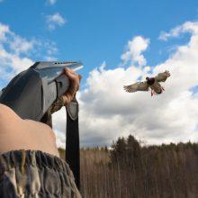 Per 50 metų JAV ir Kanadoje paukščių populiacija sumažėjo beveik 3 mlrd.