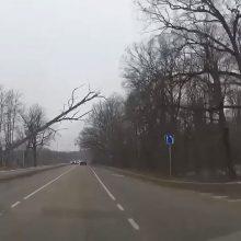 Per plauką nuo skaudžios nelaimės: vėjas vartė medžius tiesiai prieš mašinas <span style=color:red;>(vaizdo įrašas)</span>