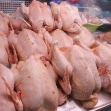 Paukščių gripas Lenkijoje gali mažinti paukštienos kainą Lietuvoje