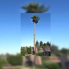Kauno rajono kapinėse – vaizdas tarsi iš Havajų