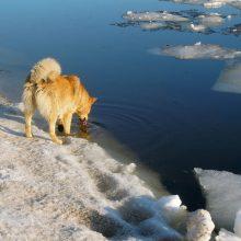 Klaipėdos rajone ugniagesiai gelbėjo į vandenį įlūžusį šuniuką