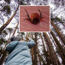 Specialistai įspėja: Girulių miške – aktyvios erkės
