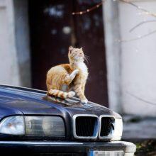 Kaimynystėje – kačių karai: daugiabučio kiemas virsta beglobių gyvūnų prieglauda