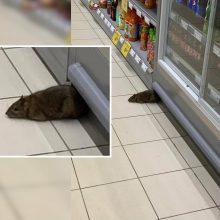 """""""Rimi"""" – šokiruojantis vaizdas: žmonės pasibaisėjo prekybos salėje lakstančia žiurke"""