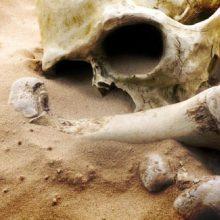 Šiurpus radinys Prienų rajono miške: aptikta galimai žmogaus kaukolė