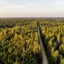 Seimas – už prezidento pataisas dėl apribojimų įsigyjant miško