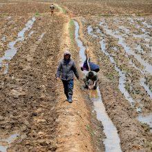 Šiaurės Korėja – ties bado slenksčiu?
