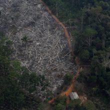 Brazilijos Amazonės atogrąžų miškų kirtimo mastai – didžiausi per dešimtmetį
