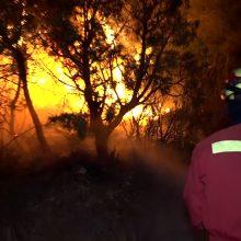 Ispanijoje siaučia nekontroliuojamas miškų gaisras: kalta karščio banga