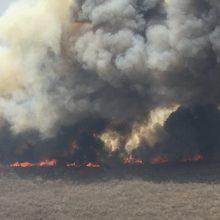 Boliviją talžo miškų gaisrai: ugnis apėmusi daugiau nei pusę šalies teritorijos
