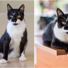 Veterinarijos klinikos darbuotojai apie katiną Hausą: jis – psichologas