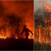 Indonezijos miškus talžo ugnis: gaisrams gesinti pasitelkta 8 tūkst. žmonių