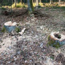 Varėnoje iškirstas įmonei priklausantis miškas, nuostolis – 20 tūkst. eurų