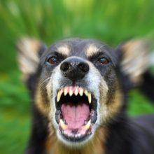 Latvijoje – tragiška gyvūnų mylėtojos lemtis: mirė nuo pasiutligės