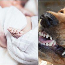 Kraupus įvykis: šuo sudraskė naujagimį
