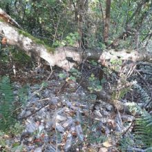 Nustatytas asmuo, užteršęs mišką 2 tūkst. butelių: turės sumokėti baudą ir sutvarkyti aplinką