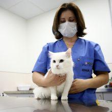 Tyrimas: žmonės gali perduoti koronavirusą katėms ir šunims