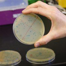 Bakterijų atsparumas antimikrobinėms medžiagoms nemažėja