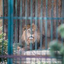 Po dramos dėl Zoologijos sodo vadovo kėdės skelbiamas naujas konkursas