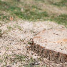 Kauniečiai sukluso: prie Kauko laiptų vėl pjauna medžius?