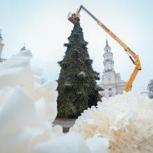 Ardoma Kauno eglė, kainavusi tūkstančius: dekoracijos bus panaudotos kitur