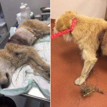 Pakraupo ir visko matę: brakonierių kilpoje besikankinantį šunį dar suvarpė kulkomis