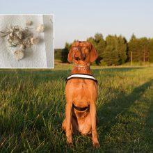 Po augintinės netekties kyla į kovą: tikisi apsaugoti kitus šunis