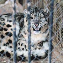Ruošiantis Zoologijos sodo rekonstrukcijos projektų keitimui – netikėti sprendimai