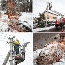 Autobusas Vičiūnuose nulaužė pušį, ši virsdama nutraukė elektros laidus