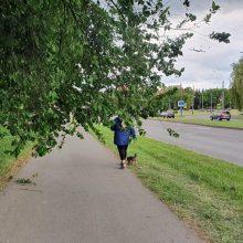 Piktinasi: medžių šakos trukdo praeiti