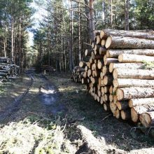 Varėnos rajone pavogta miško už 8 tūkst. eurų