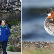 Pataria stebėti spalvingą ir įdomų paukščių pasaulį: jie – artimi žmonių kaimynai