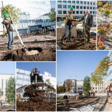 Ryškėja Vienybės aikštės vaizdas: pasodinti medžiai