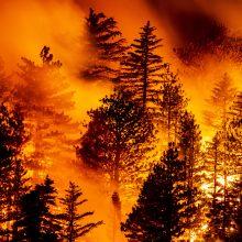 Kalifornijos gubernatorius: gaisrus skatina klimato kaita