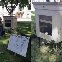Istorinės Prezidentūros sodelyje apsigyveno bitės: jei norite pamatyti – paskubėkite