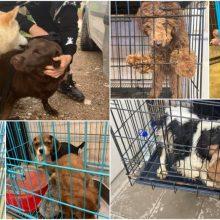 VMVT: tiriant gyvūnų gerovės pažeidimus pasitvirtina pusė pranešimų