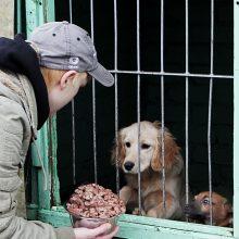 Atsibodę: kiekvieną mėnesį uostamiesčio gyvūnų prieglaudose atsiduria dešimtys išsekusių, išbadėjusių gyvūnų.