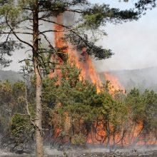 14 kartų mišką padegęs vyras privalės susimokėti beveik 420 tūkst. eurų