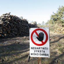Neringa liks be miškų?