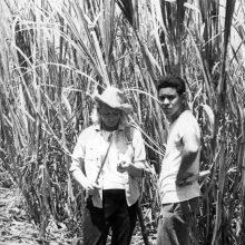 Egzotika: Kuboje L.Ubartienei teko patirti, kaip kertamos cukranendrės, vietos gyventojai laivo įgulai į plantacijas surengė ekskursiją.
