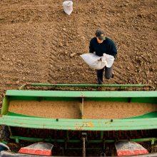 Ūkininkams pradedama mokėti tiesioginių išmokų avansinė dalis