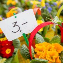 Pavasario mugė: pasirinkimas tas pats, bet kainos kitos