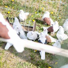 Nemuno saloje – šeimos ir jų augintiniai