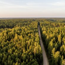 Dalyje Lietuvos miškų – didelis gaisrų pavojus