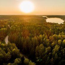 Lietuvos miškuose – pažintinės ekskursijos apie miško gyvenimo ciklą