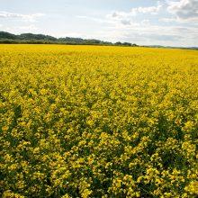 Apklausa: šalies ūkininkai ruošiasi visoms galimoms rizikoms