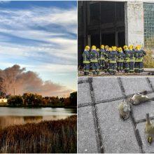 Situaciją Alytuje lygina su Černobyliu: trūksta respiratorių, žūsta gyvūnai