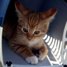 Veterinarijos tarnyba siūlo griežtinti nekomercinį gyvūnų vežimą