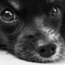 Netoli Alytaus rastas myriop išmestas šuo